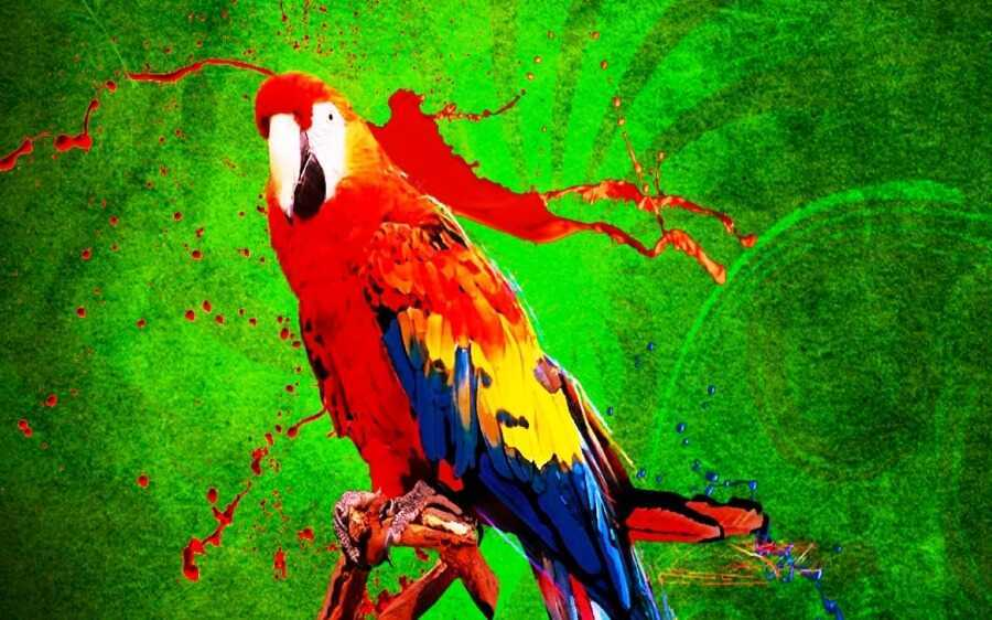 parrot bird - Parrot 4.10 Forensics & Anonymous Surfing