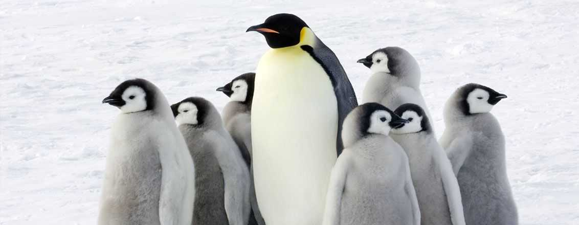 pinguin - Linux Foundation Free admission to Linux for everyone