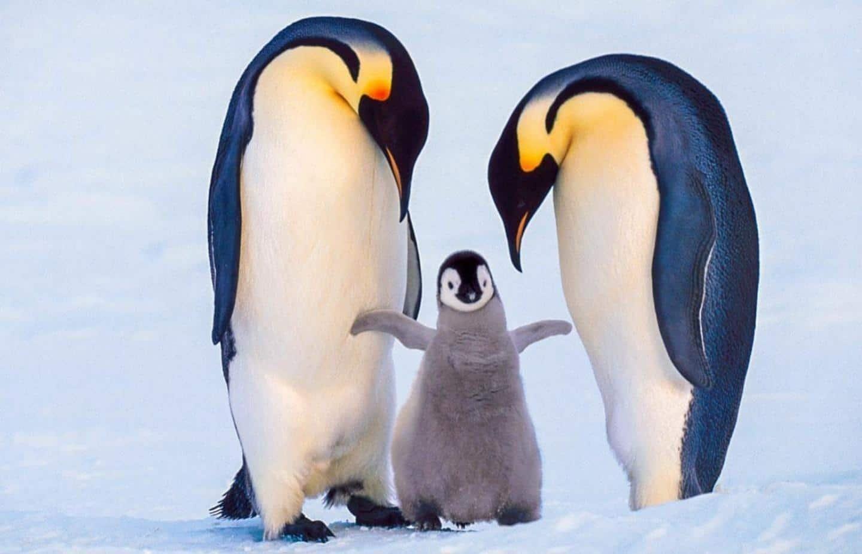 pinguine - Septor Linux 2021.1 ανωνυμία για όλους
