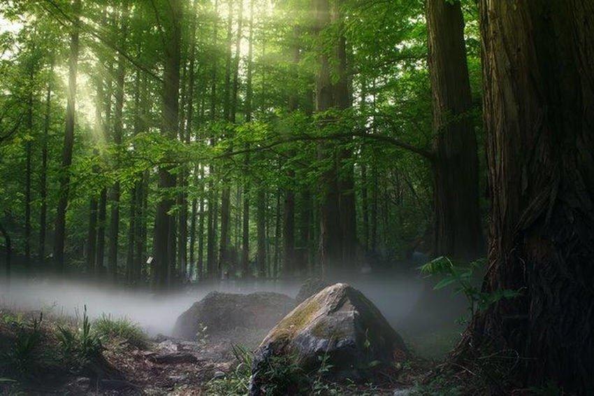 TreeFm - Ακούστε τους ήχους του δάσους από όλο τον κόσμο