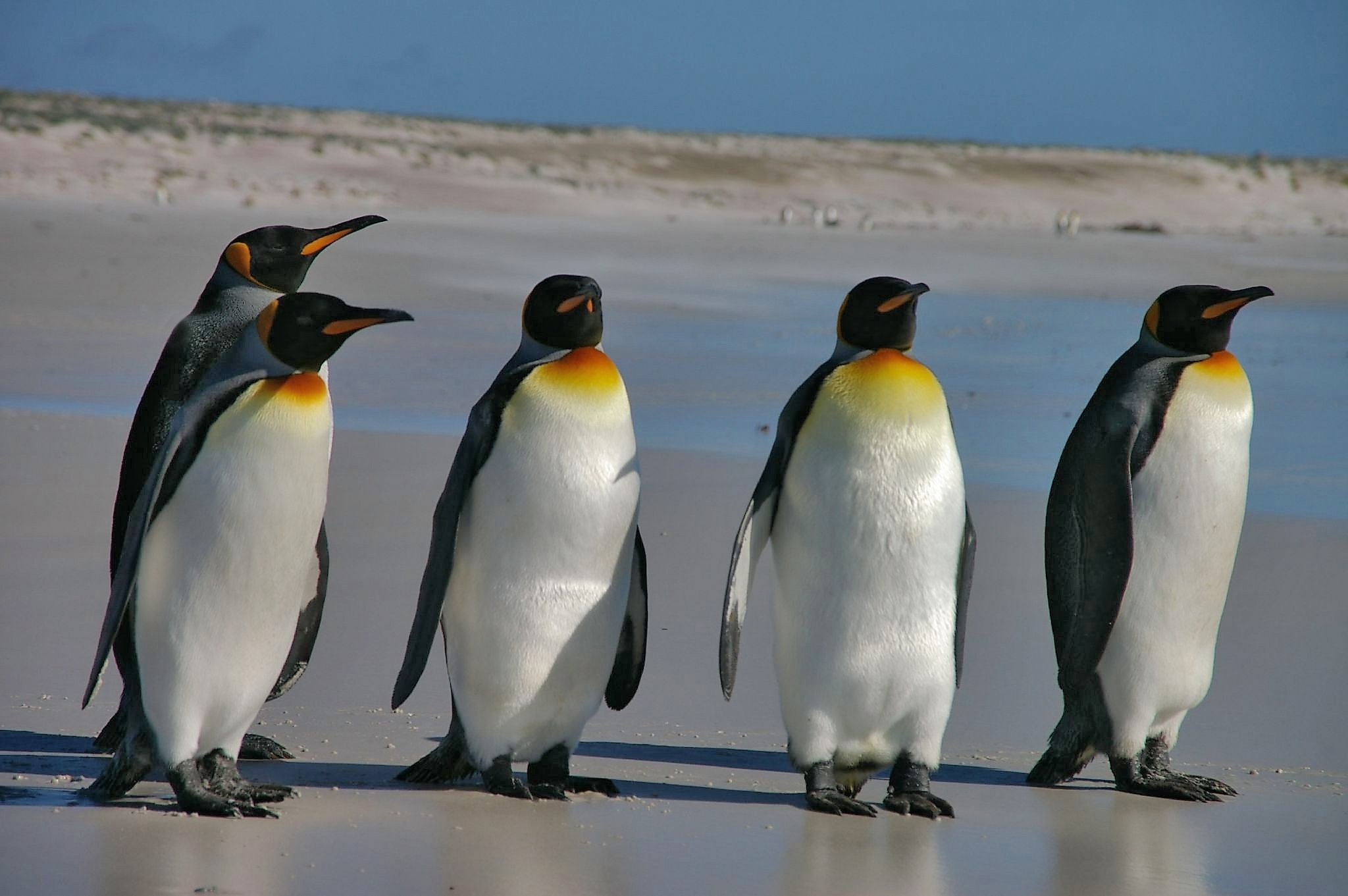 Penguins - Sudo upgrade the micro-application immediately